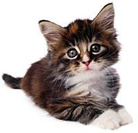 cat2-2
